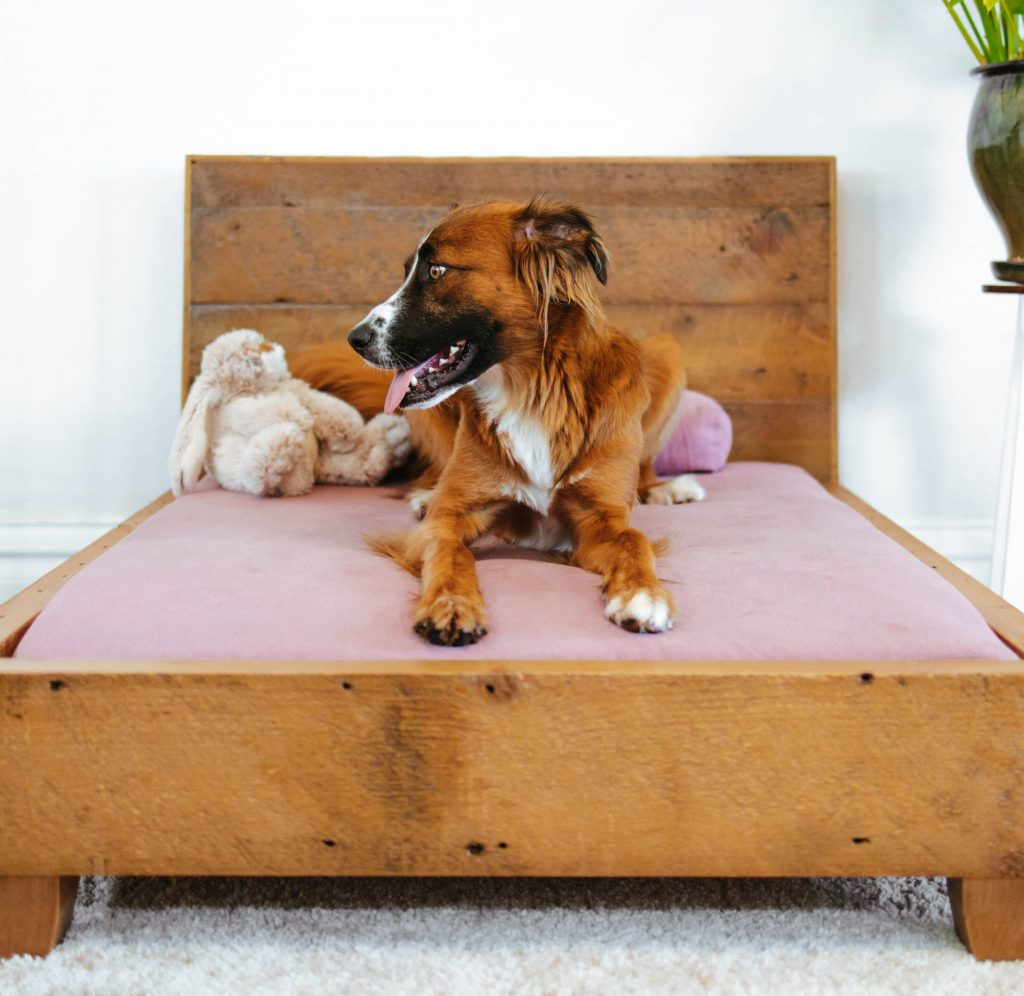 non-toxic-eco-friendly-organic-gifts-for-pets-avocado-dog-bed