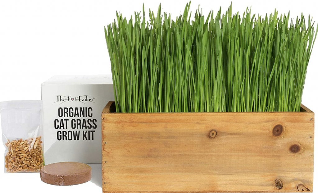 organic natural non toxic eco friendly sustainanble gifts for cat lovers the cat ladies cat grass the filtery